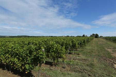 Lugagnac葡萄园得天独厚的环境,得以出产高品质的葡萄酒